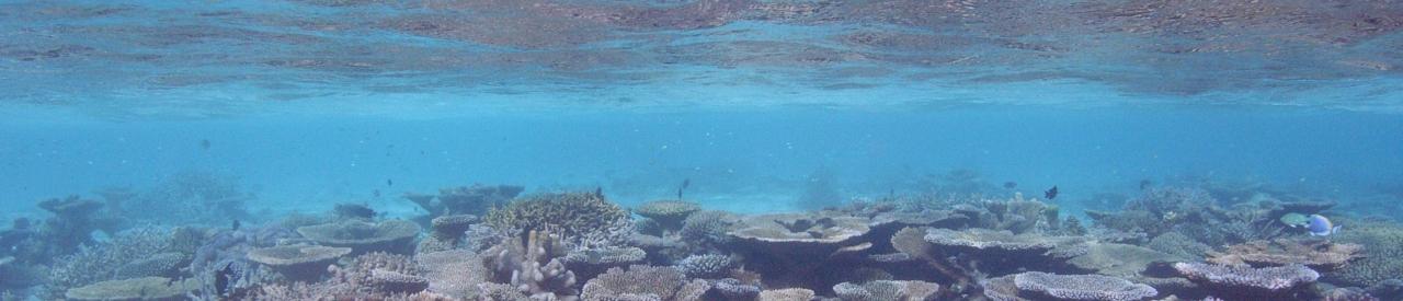 いつまでも綺麗な海でダイビングしたーい